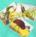 Exotic birds 001